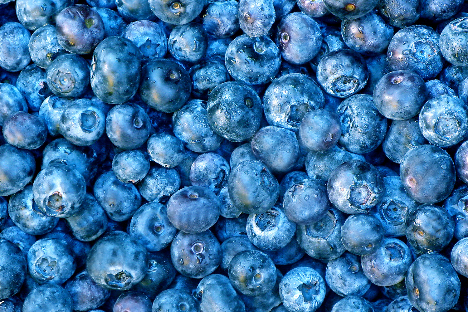 picked blueberries